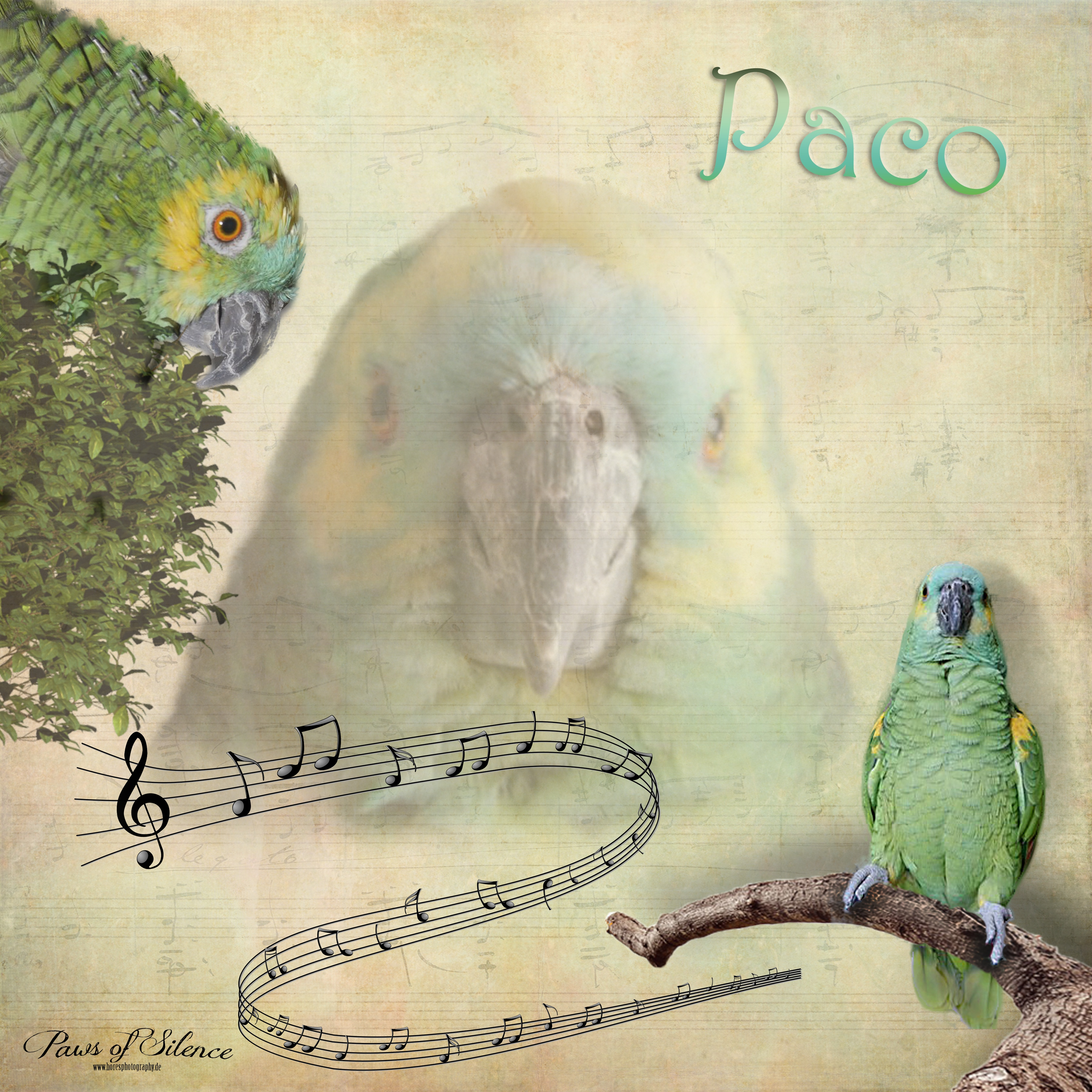Paws of Silence77-1975paco collage.jpg794