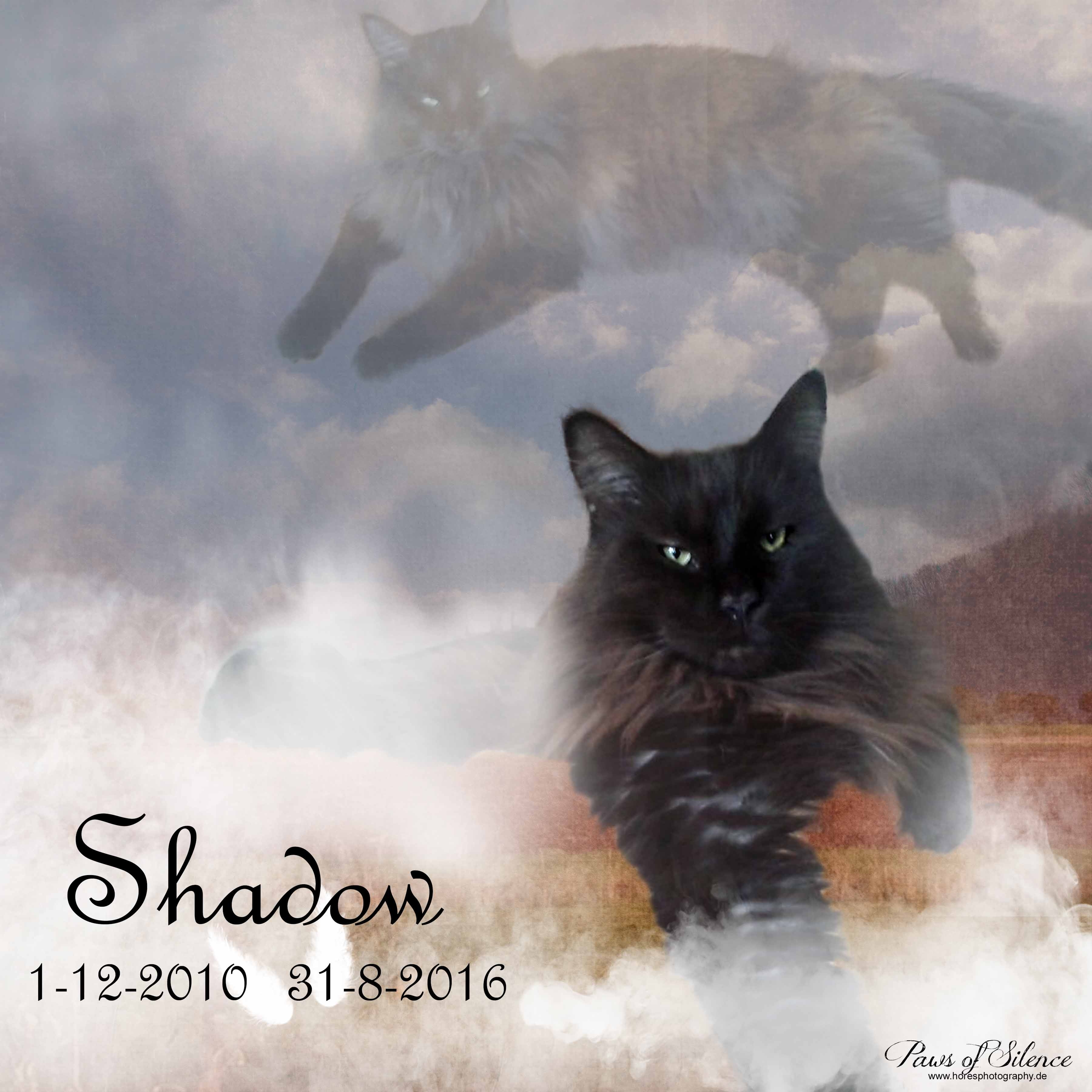 Paws of Silence77-2051shadow collage.jpg800
