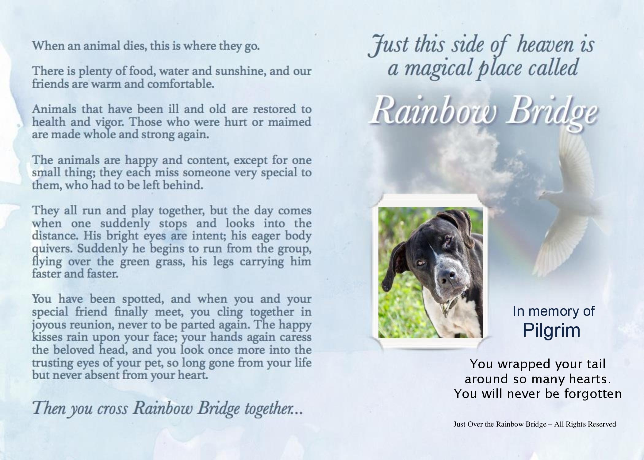Just Over The Rainbow Bridge1-3625In memory of Pilgrim.jpg453