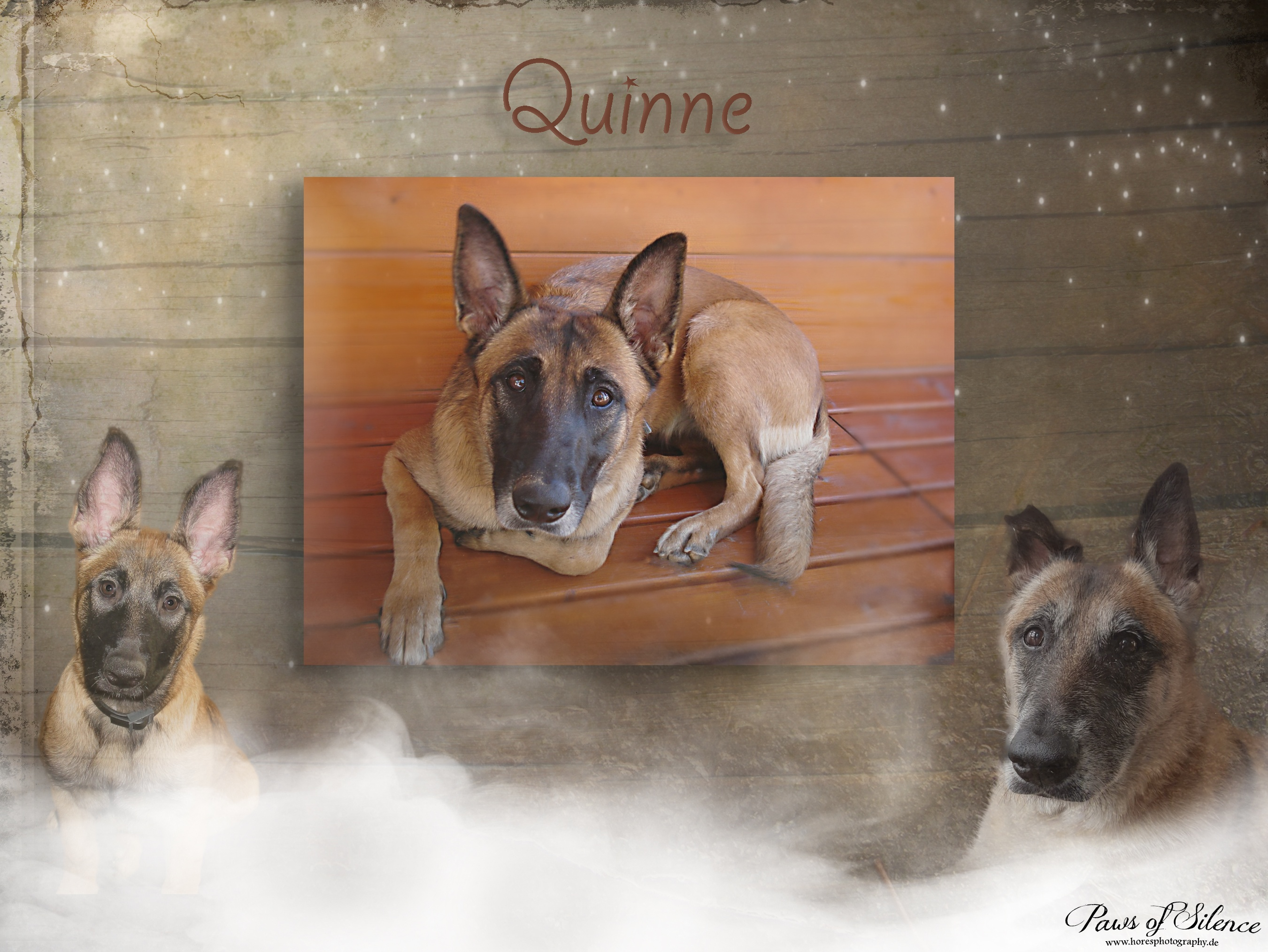 Paws of Silence77-7155quinne collage.jpg799
