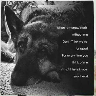 Pet Loss Quotes & Reflection